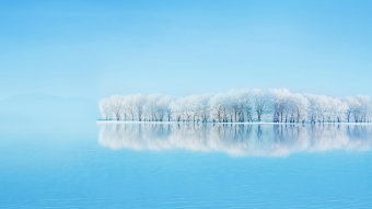 Frosted Trees Reflections Wallpaper