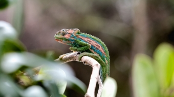 Animal Chameleon 4K HD Wallpaper