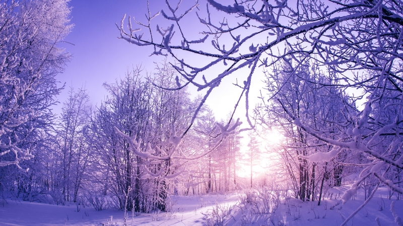 Snow covered Winter Trees Wallpaper