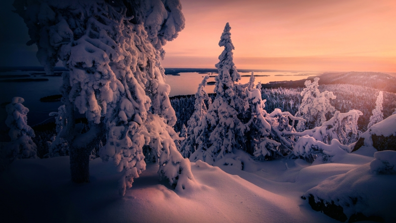 Winter Snow covered Trees 4K Wallpaper