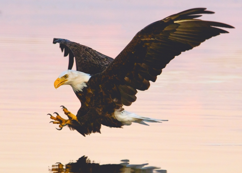 Soaring Eagle Over Water Body Wallpaper