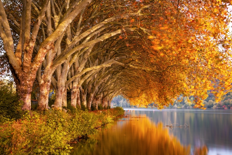 Autumn Trees Orange Lake 5k Wallpaper