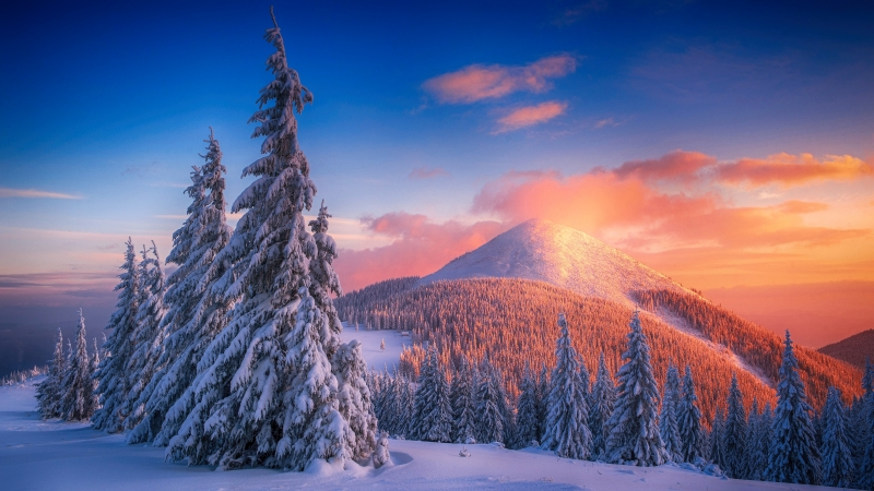 Snowy Pine Trees And Mountains 4k Wallpaper