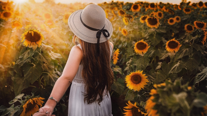 GIrl in Sunflower Park 4K 8K Wallpaper