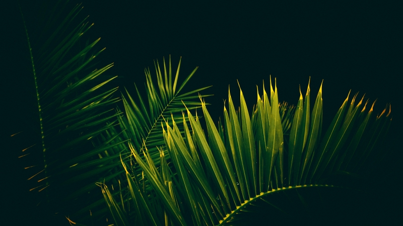 Palm Tree Leaves Branches 4K Wallpaper