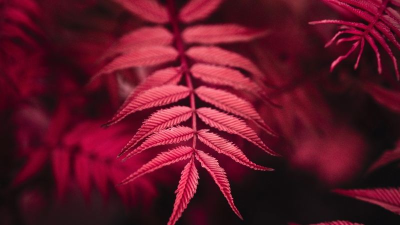 Red Plant 4K Wallpaper