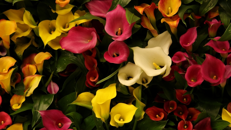 Colorful Flowers 5K Wallpaper