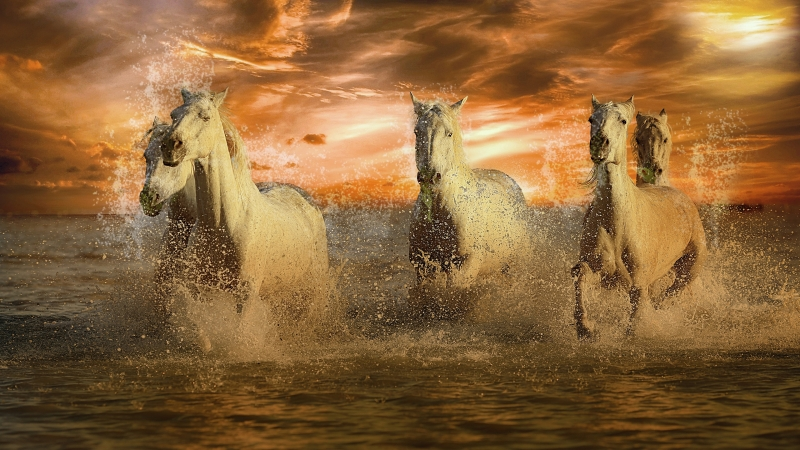 Running White Horses 4K Wallpaper