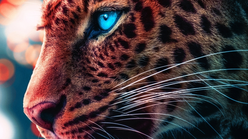 Cheetah Magical Eyes 4K HD Wallpaper