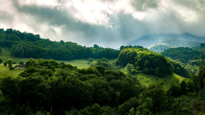 Green Forest Trees Rays 4K HD Wallpaper