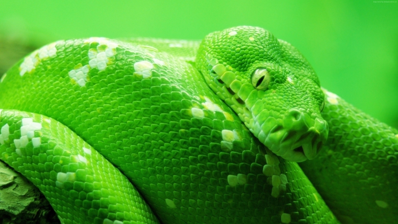 Bow Tree Green Snake 4K HD Wallpaper