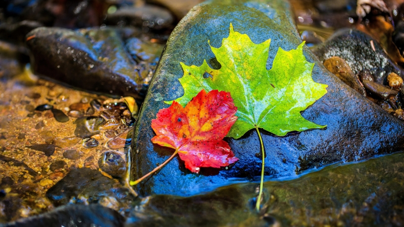 Colorful Leaves In Stone 4K 8K HD Wallpaper