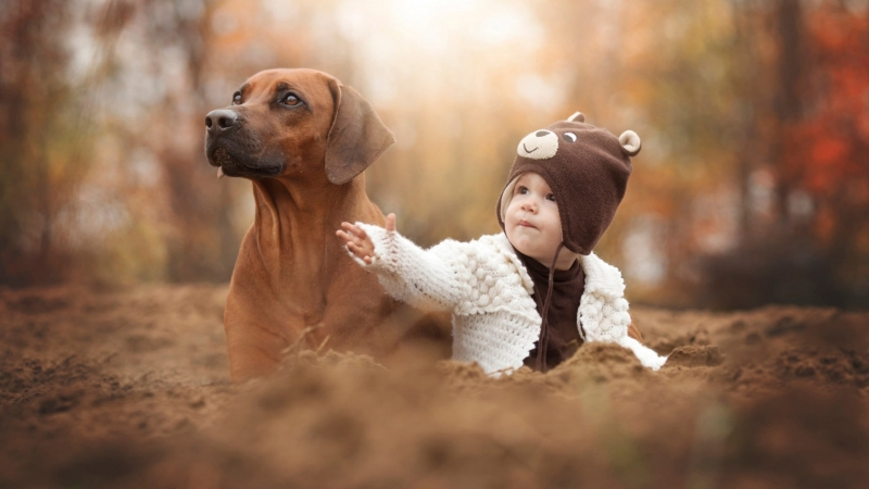 Adult Short Coated Brown Dog Animals Baby Hat 4K HD Wallpaper
