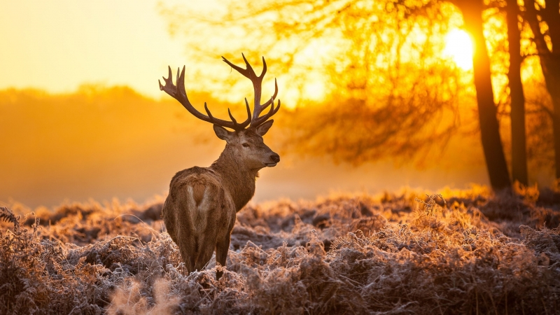 Brown Deer Nature Animals Trees Sunset 4K HD Wallpaper