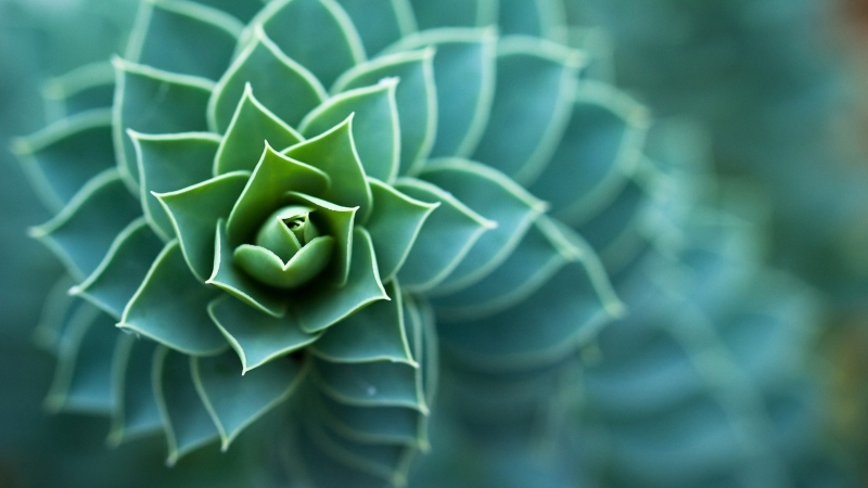 Macro Plants Succulent Depth Of Field Nature Leaves 4K HD Wallpaper