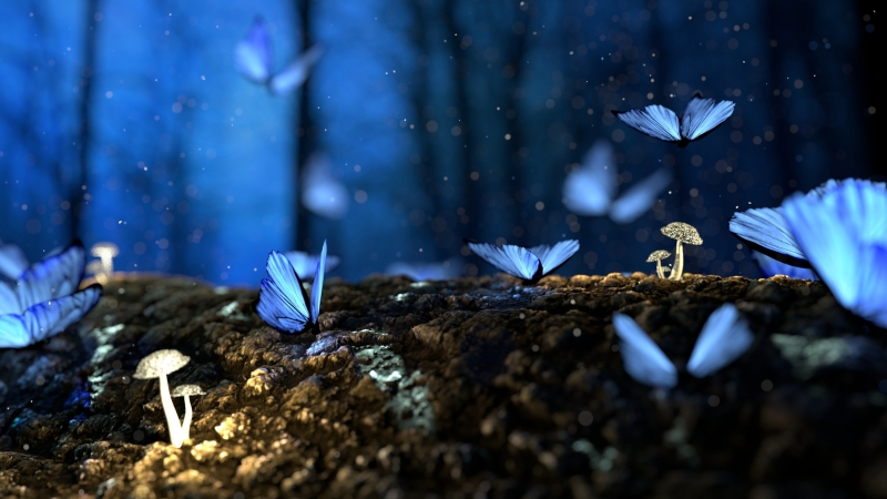 Beautiful Butterfly Blur 4K HD Wallpaper