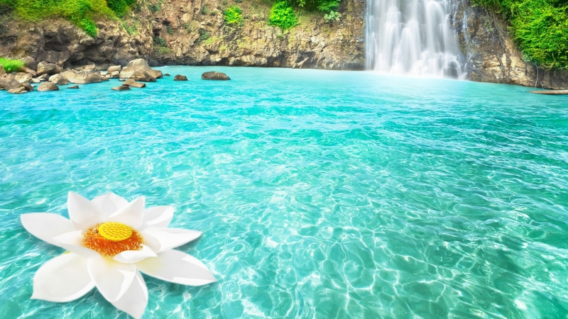 Waterfall Flowers 4K HD Wallpaper