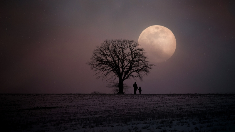 Father And Child Tree Moon Night 4K HD Wallpaper