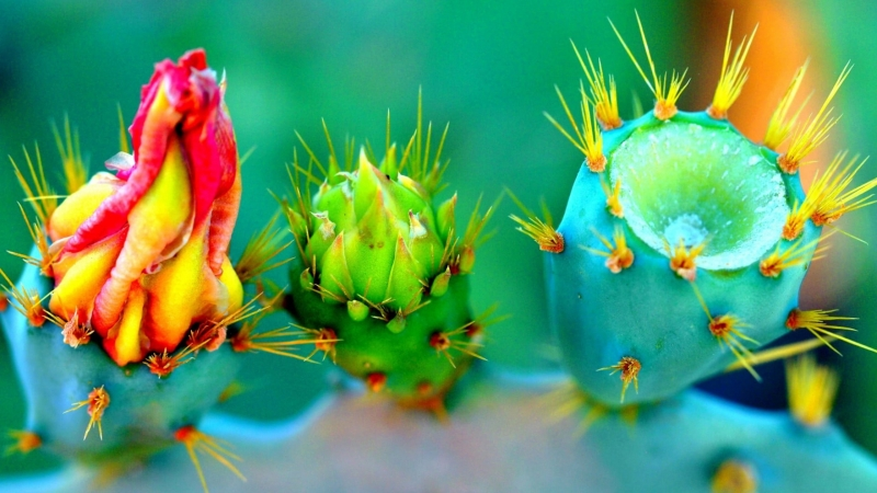 Closeup Cactus Plant Nature Flowers Thorns Colorful 4K HD Wallpaper