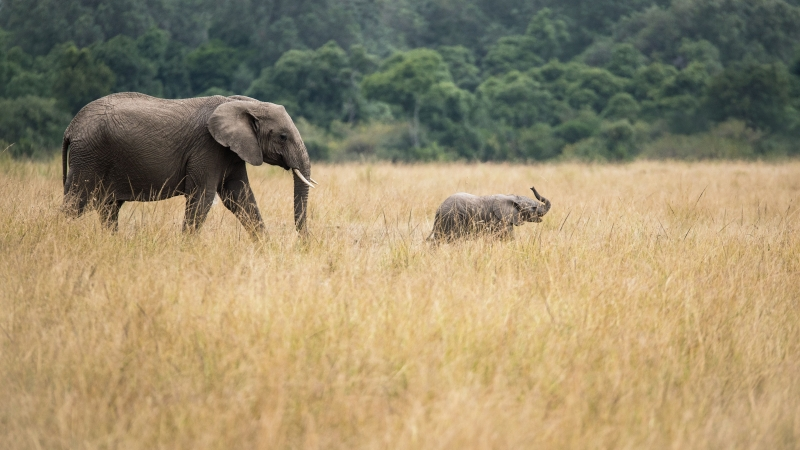 Elephant With Baby Trees Forest 4K 5K HD Wallpaper