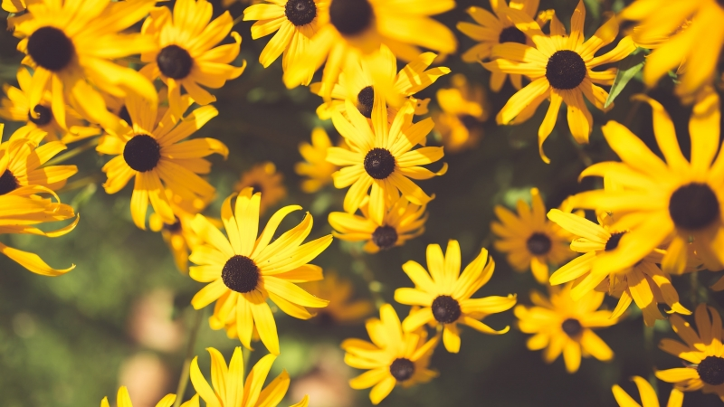 Flower Yellow Garden 4K HD Wallpaper