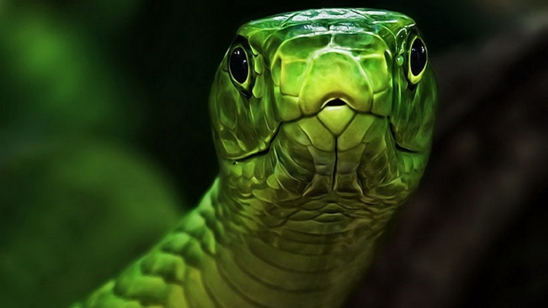 Green And Gray Snake Animals 4K HD Wallpaper