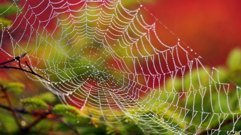 White Spider Web With Water Dew In Closeup 4K HD Wallpaper