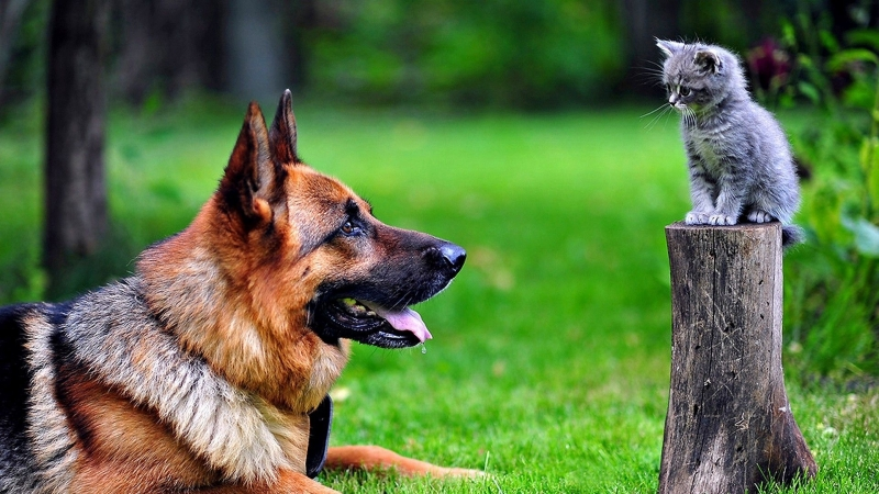 Dog And Cat Lookiing 4K HD Wallpaper