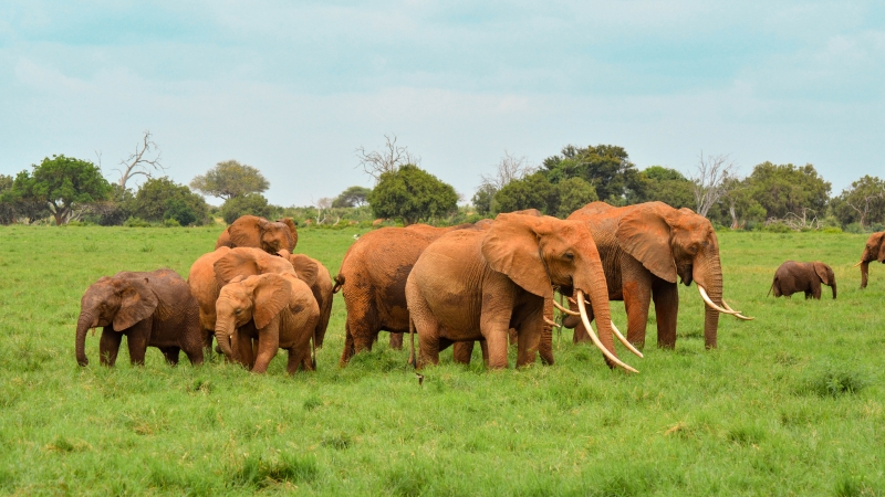 Elephant Whole Family In Forest 4K 5K HD Wallpaper