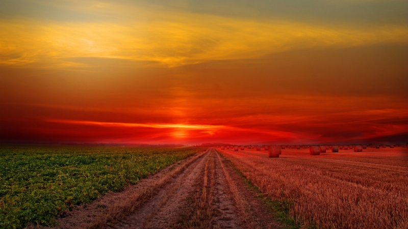Colorful Sunset at Lonely Field 4K HD Wallpaper