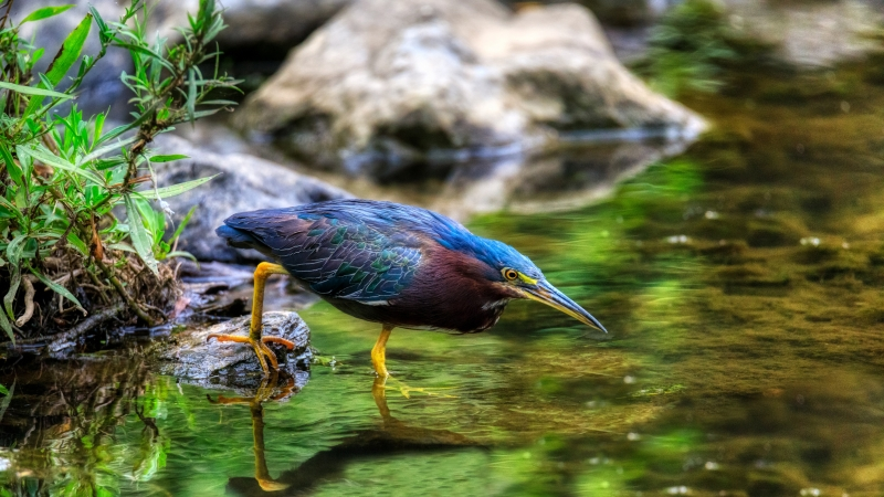 Bird In Forest Water Grass 4K 8K HD Wallpaper