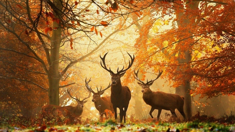 Deer Forest Trees HD Wallpaper
