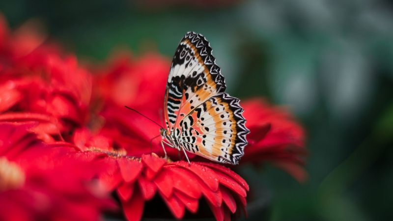 Butterfly Wings Bright Flower Blur 4K HD Wallpaper