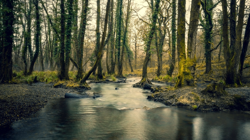 Forest River Trees 4K HD Wallpaper