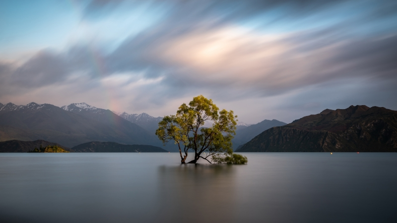 Solo Tree Lake Clouds 4K 5K HD Wallpaper