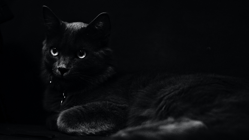 Dark Black Cat 4K 5K HD Wallpaper