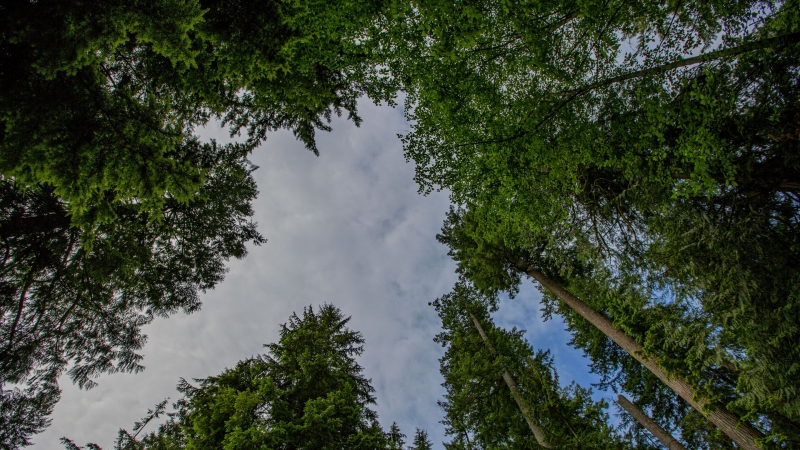 Trees Forest Bottom View 4K HD Wallpaper
