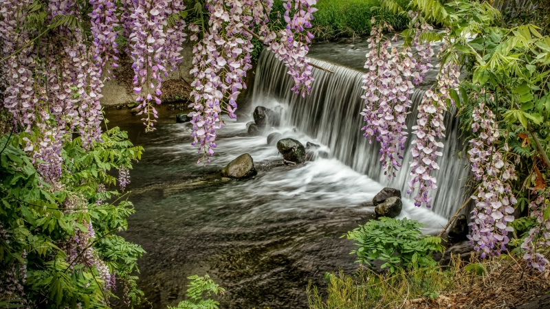 Waterfall Rocks Plants 4K HD Wallpaper