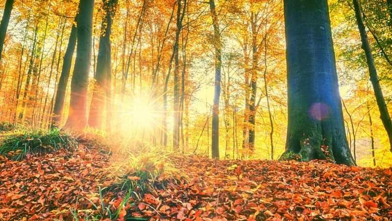 Sunlight Passing Through Green Leaf Trees HD Wallpaper