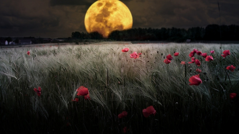 Quater Moon During Night Time HD Wallpaper