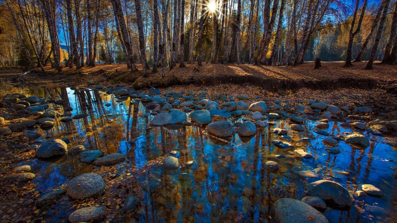 Sun Passing Through Trees Under Blue Sky Reflection HD Wallpaper