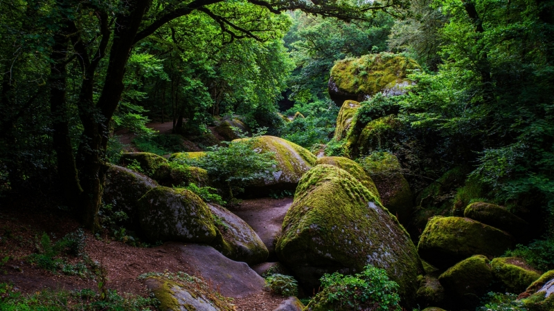 Green Trees Between Green Covered Rocks During Daytime 1 HD Wallpaper