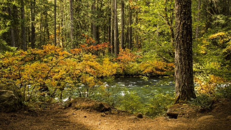 River Passing Through Forest With Green Trees During Daytime 4K HD Nature Wallpaper