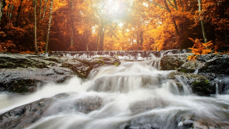 Sunlight Passing Through Yellow Leaves Under Waterfall HD Nature Wallpaper