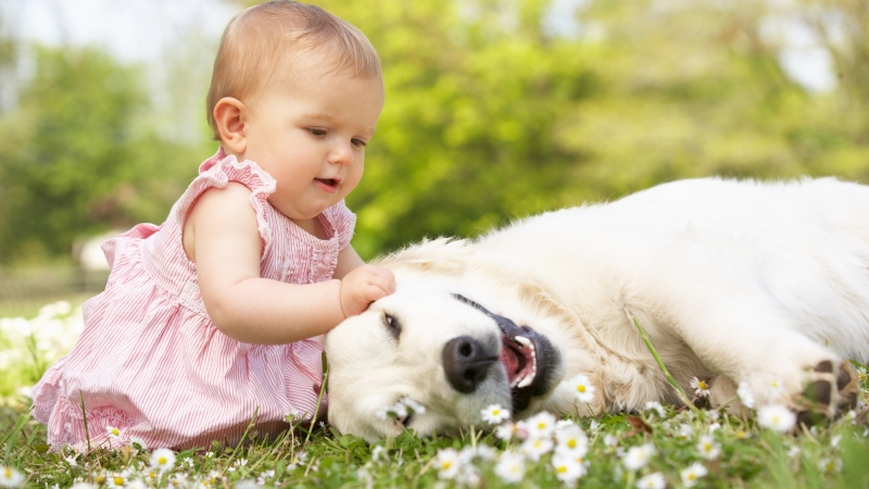 Baby Playing With Dog 4K 5K HD Cute Wallpaper