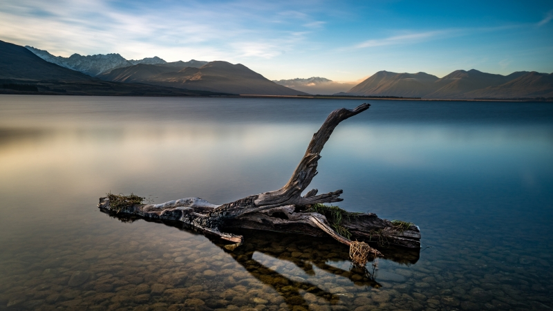 Dry Tree In Lake In Front OF Brown Mountain Under Blue Sky During Daytime Earth Lake 4K HD Nature Wallpaper