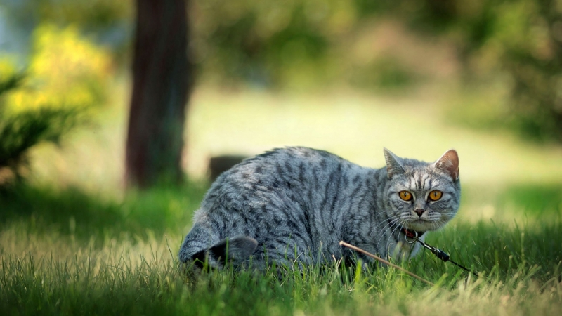 Animal Cat HD (2) Animals Wallpaper