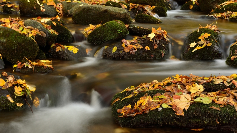 Green Covered Rocks Between River With Dry Leaves Fall Down 4K HD Nature Wallpaper