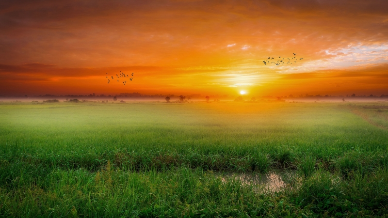 Green Field With Birds During Sunset Time 4K HD Nature Wallpaper
