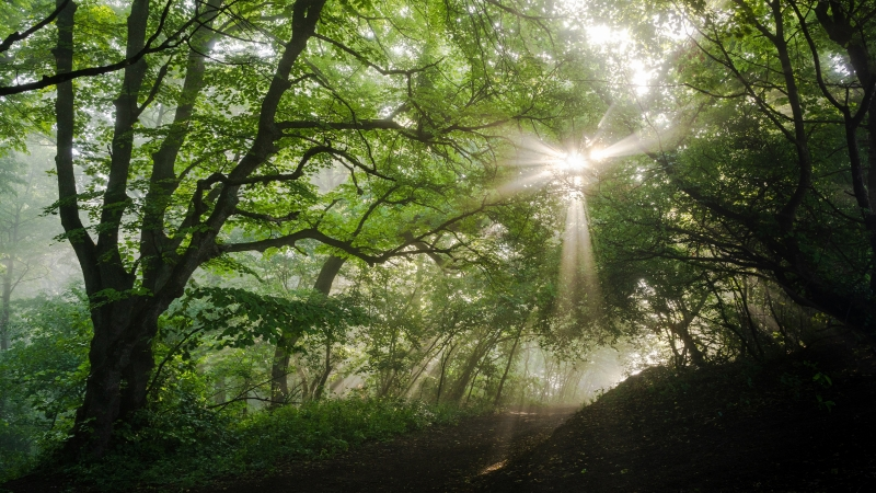 Sunlight Passing Through Green Leaves In Forest During Daytime 4K HD Nature Wallpaper